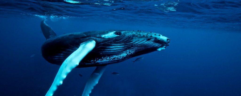 สัตว์น้ำปลาวาฬ